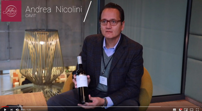 Pinot Grigio Trentino DOC Bottega Vinai Trentin Weißwein trocken